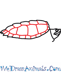 how to draw an alligator snapping turtle