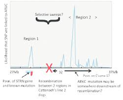 diagram showing in sketch form the chromosome 17 loci identified