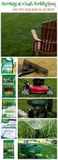 our five step plan for how to develop a healthy lawn lawn lush