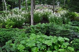 great ideas shade garden design home decor inspirations