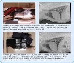 Radiology Of Thorax Today U0027s Technician Imaging Essentials Seriessmall Animal