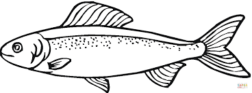 salmon fish coloring page salmon 17 coloring page free printable coloring pages