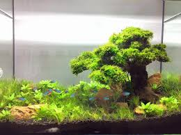Aquascaping With Driftwood Bonsai Driftwood Aquascape Bonsai Driftwood