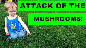 mushrooms in my lawn what do i do youtube