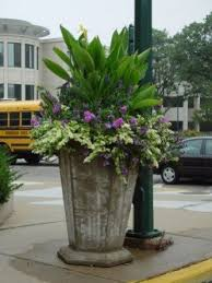 Summer Container Garden Ideas 2391 Best Container Plants Summer Images On Pinterest