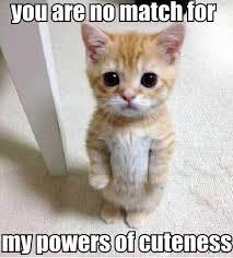 No Grumpy Cat Meme - 75 hilarious grumpy cat memes best cat memes love memes