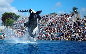 seaworld orlando offering free admission to florida