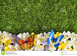 butterfly flower border background grass copy space spring