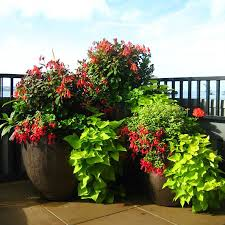 container gardening services in seattle seasonal color pots llc