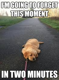 Sad Dog Meme - i m going to forget this moment in two minutes sad dog quickmeme