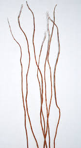 curly willow branches curly willow centerpieces branches for centerpieces
