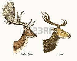 120 white tail deer buck stock illustrations cliparts and royalty
