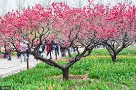 Beijing Botanical Garden Where To See Lovely Flowers In Beijing Discover China