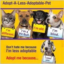Dogs For The Blind Adoption Help For Homeless Pets