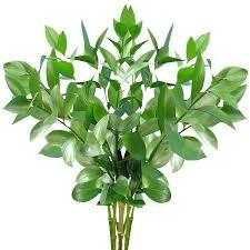 stem flowers fresh flowers and greens israeli ruscus 100 stems