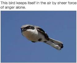Funny Bird Memes - this bird and i have a lot in common memebase funny memes