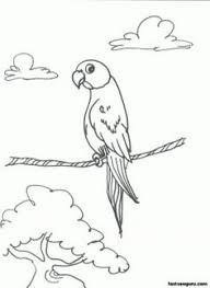 pirate coloring printables pirate parrot coloring