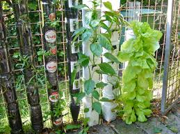 farming or gardening in bottle towers or pot towers willem van
