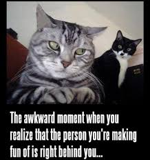 Awkward Moment Meme - awkward moment cat meme cat planet cat planet