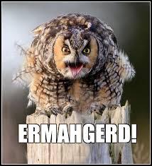 Owl Memes - hilariously adorable owl memes