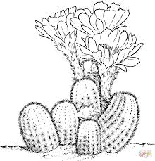 cactus coloring page kids coloring free kids coloring