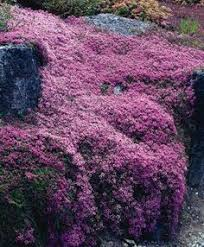 All Year Flowering Shrubs - top 10 flowers that bloom all year gardens plants and flowers