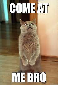 Come At Me Meme - come at me bro cat meme cat planet cat planet