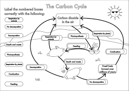 gcse carbon cycle a4 poster to label by beckystoke teaching