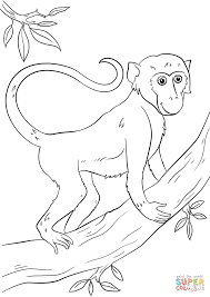 cartoon monkey on tree coloring page free printable coloring pages