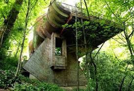 Creative Architect For Tree House Design Ideas Home Design And - Creative home designs