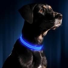 collar light for small dogs amazon com illumiseen led dog collar usb rechargeable
