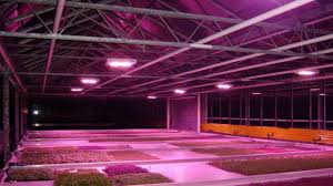 the best 2017 600w led grow light for indoor garden greenhouse