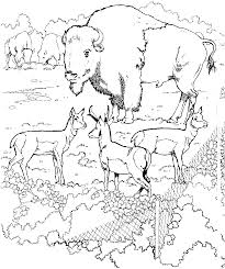 zoo coloring pages 1 coloring kids