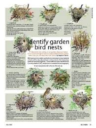 25 bird nests ideas nests nest birds nest