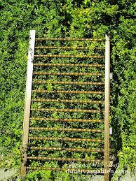fresh easy garden trellis ideas 7550