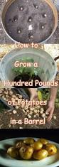 493 best gardening images on pinterest gardening vegetable