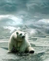 polar bear swimming free stock photo public domain pictures