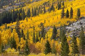 california fall color eastern sierra u2013 natural history