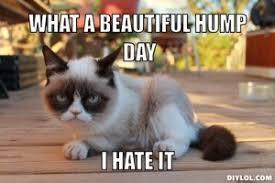 Hump Day Memes - hump day memes