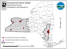 Emerald Ash Borer Map Emerald Ash Borer Elpoi