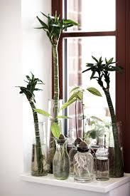 Inside Plants by Best 20 Avocado Plant Ideas On Pinterest Plant Avocado Seed