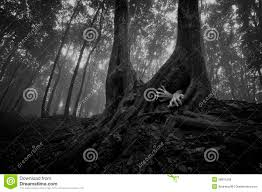 haunted forest black and white stock images image 34022124