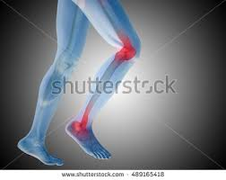 3d Knee Anatomy 3d Rendered Medically Accurate 3d Illustration Stock Illustration