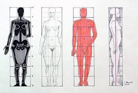 Anatomy Difference Between Male And Female Drawing The Human Figure Getting The Proportions Right