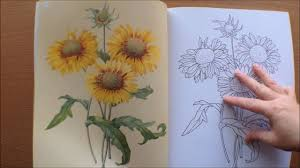 colouring flowers colouring book pictures redoute