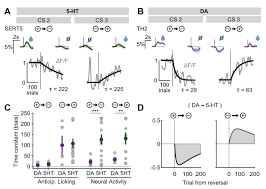 activity patterns of serotonin neurons underlying cognitive