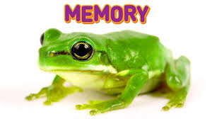 frogs memory