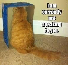Mad Kitty Meme - lolcats photos meme guy