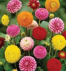 pretty flowers for summer garden at ace gardener