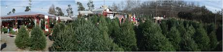 cox farms christmas